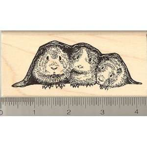 Three Guinea Pigs in a Blanket Rubber Stamp   Wood Mounted