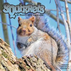 Animal Calendars Squirrels   16 Month   11.7x11.7 inches